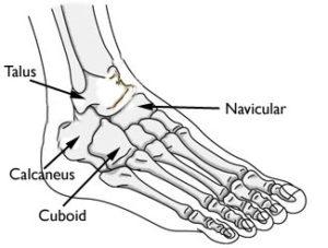 Image of bones in foot with names of bones