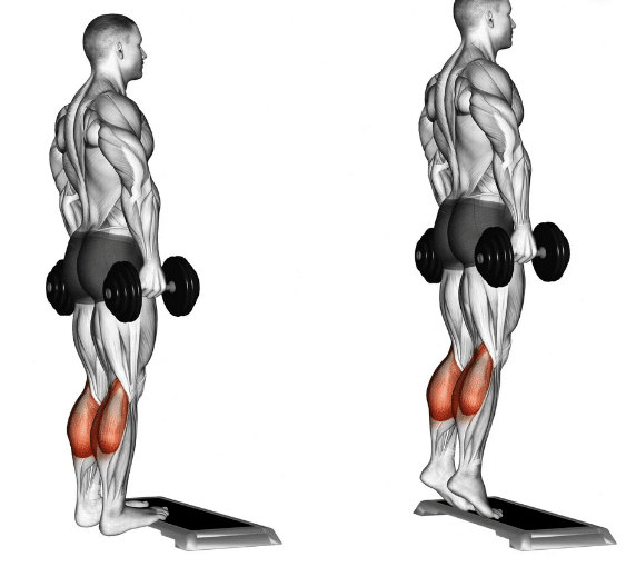 Calf exercise with dumbells diagram