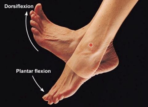 Dorsiflexion and plantar flexion demonstration